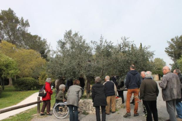 olivier2014-1